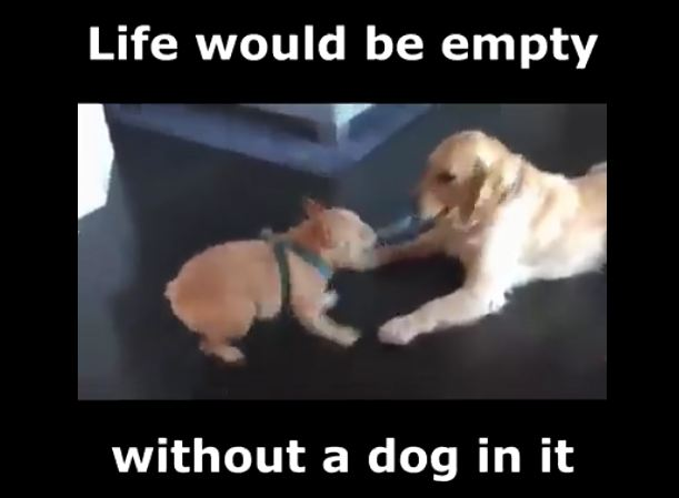 Life Would Be Empty Without Dogs!