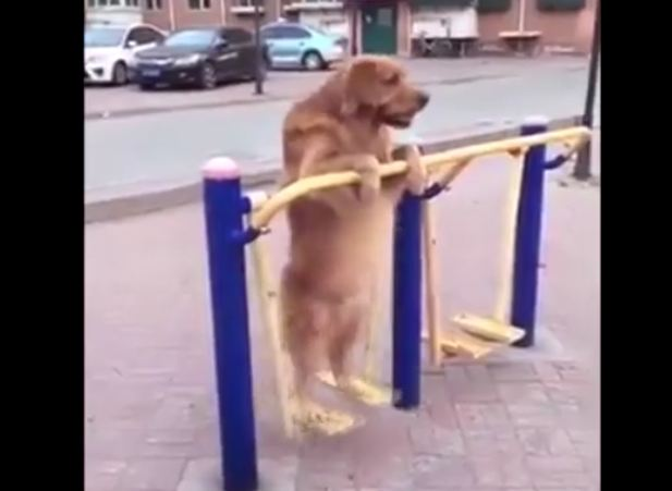 Just a Dog on a Swing, Having a Grand Old Time…
