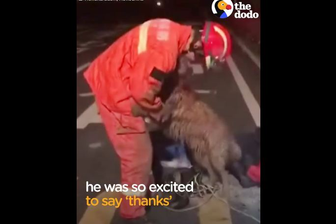 Dog Trapped In A Deep Well Was So Excited To Thank His Rescuer