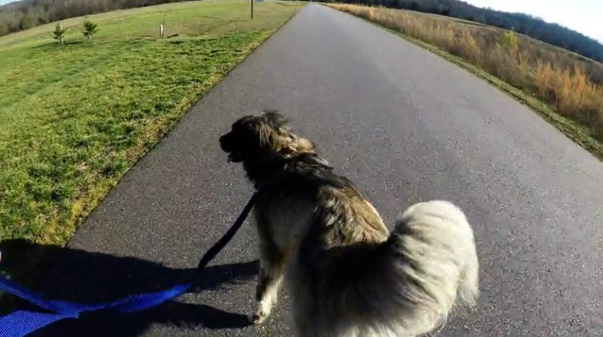 Dog does 'happy feet' dance for walk time