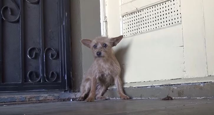 This Abandoned Dog Was So Terrified Of Humans. That's Why I Still Can't Believe The End…Wow.