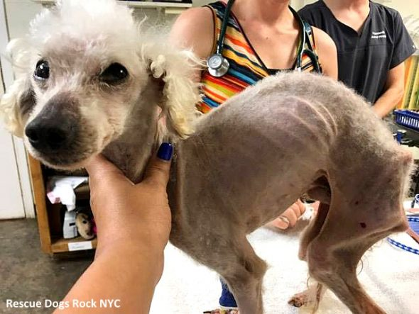 Badly Neglected Georgia Dog Spent So Long in a Tiny Cage That His Spine Curved