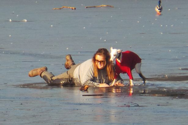 Dog Ran Across Frozen Lake And Fell In, Then His Brave Owner Rushed To His Rescue