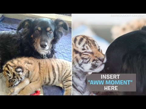 Blakely was adopted by the zoo, but they never expected this when they took him in