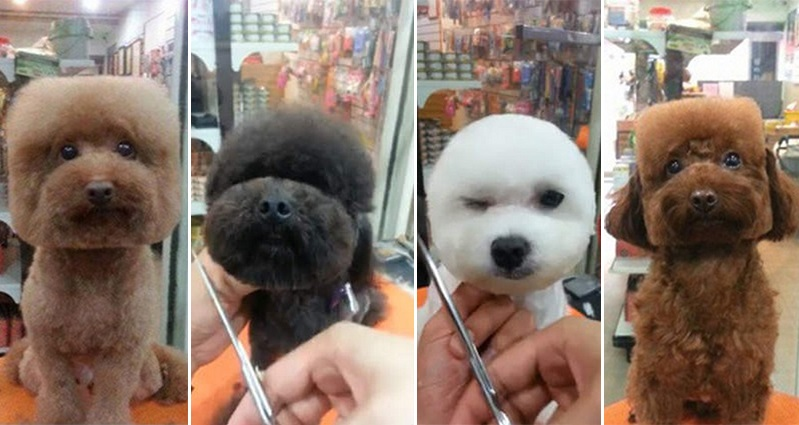 Taiwan Sets The Trend: Stylish Haircuts for Your Dog – Round or Square?