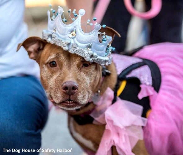 "Dog Lovers Throw a ""Senior Prom"" to Help Elderly Dogs Get Adopted"