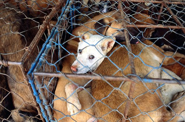 Taiwan Becomes the First Asian Country to Ban the Consumption of Dog and Cat Meat