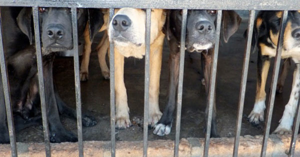 Taiwan Makes Animal Rights History As First Asian Country To Ban Dog And Cat Meat