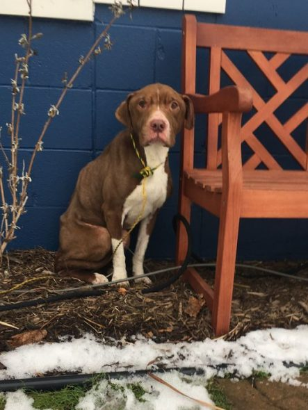 Dog Found Frostbitten and Emaciated on Shelter's Doorstep Finds a Forever Family