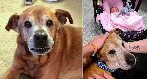 18-Year-Old Dog Stays Alive Just Long Enough to Meet His New Baby Sister