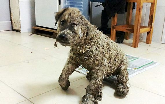Kids Leave Puppy To Die After Covering It With Industrial Glue, However It Refuses To Give Up