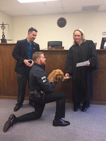 This Police Department Swears In Their Newest Detective: A 13-Week-Old Bloodhound Named Prince