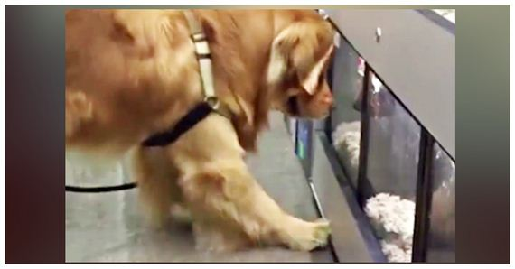 Dog Loves To Visit His Friends At The Pet Store, But Always Refuses To Leave!