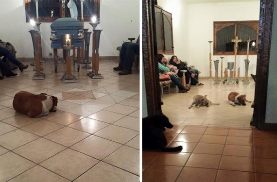 The reason these stray dogs showed up to a funeral is beyond words