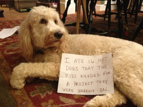 These 16 dogs have no shame, vow to not get caught next time