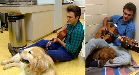 Veterinarian Sweetly Sings Lullabies to Scared Dogs Before They Go In for Surgery