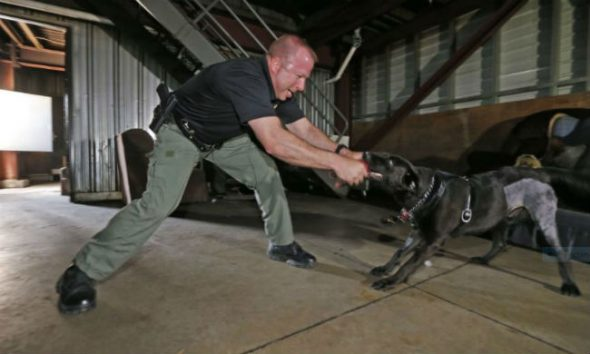 Rescue Dog No One Wanted Gets New Life as an Arson Detective