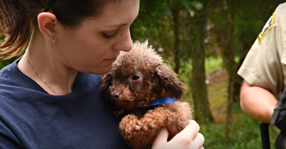 Puppy Mill Dog, Only Used For Breeding, Sees Sun For The First Time