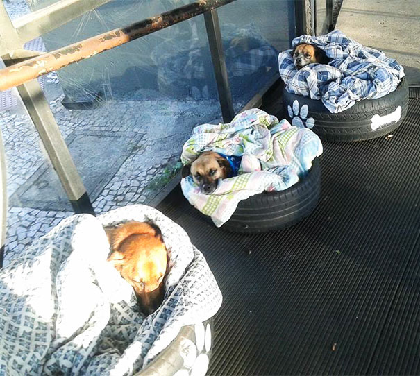 Bus Station Comes Up With A Brilliant Solution To Help Stray Dogs Escape The Cold