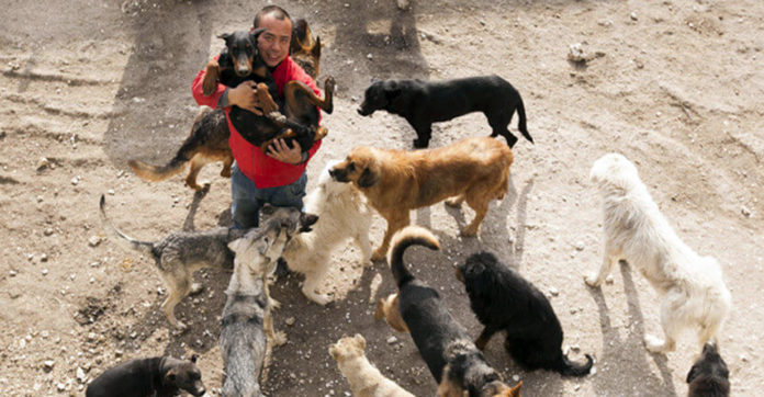 Former Millionaire Spent His Entire Fortune Rescuing Dogs For One Heartbreaking Reason