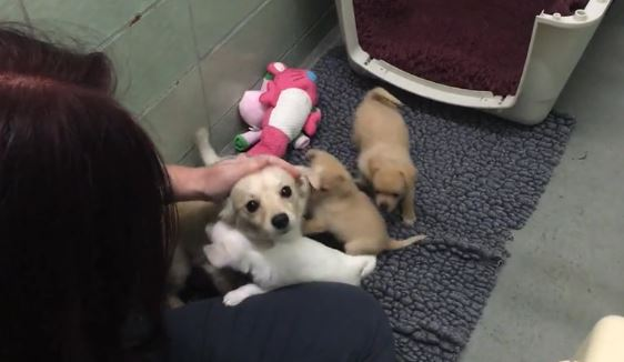 Scared dog sits in the corner of the shelter, but then she sees her puppies again