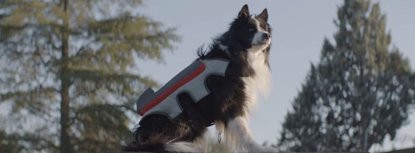 Dogstagram? New Wearable Tech Enables Dogs to Post to Social Media