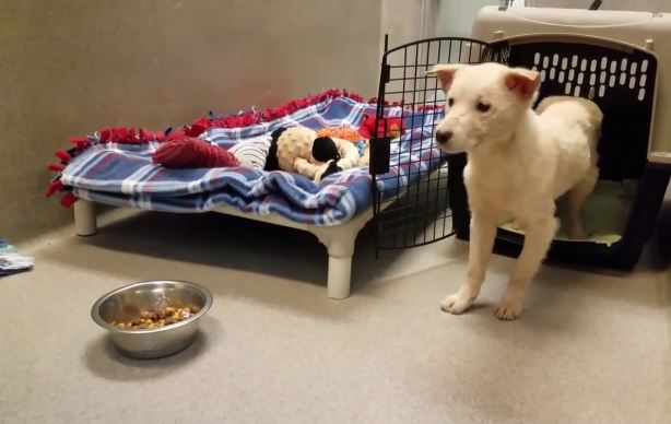 Rescue dog hesitant to leave crate and take first step toward new life