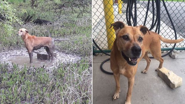 Dog found tied to cinder block doesn't understand why his family abandoned him