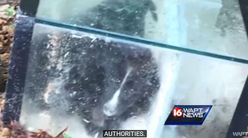 Man finds an aquarium cemented shut, and inside… omg