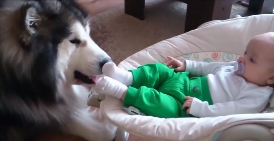 Hey, Join Your Friends On PMG! Mom's filming the baby taking a nap when a nose pokes through beside him