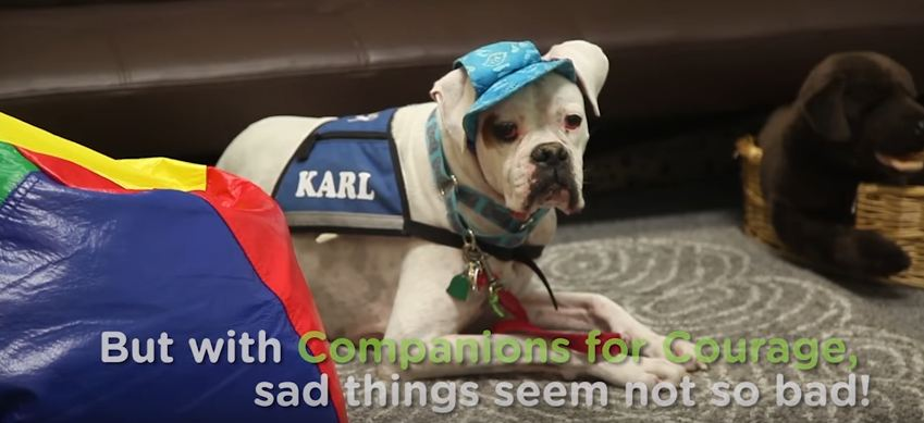 """Companions for Courage Establishes a """"K9th Circuit Court"""" Program to Help Traumatized Children Tell Their Stories"""