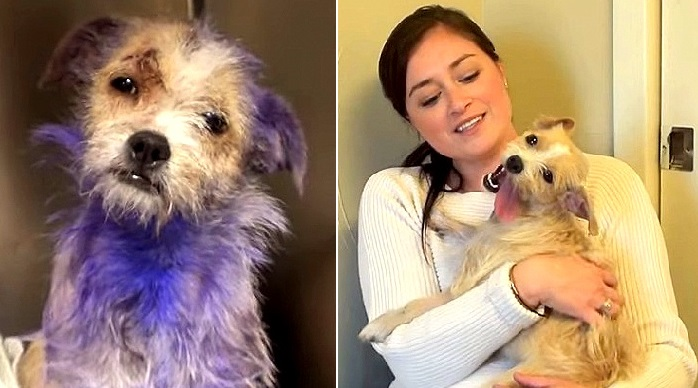 Neglected And Severely Wounded, This Pup Was Thought To Be A Goner! Her Recovery… Miraculous!