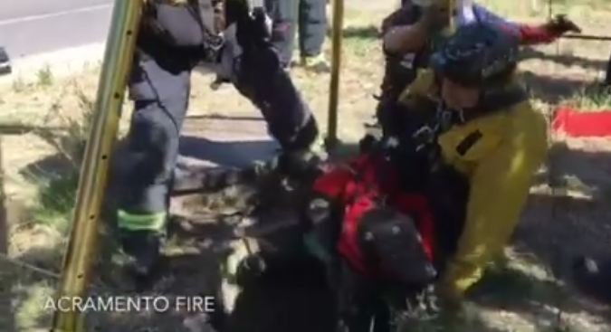 Dog Fell 15-Feet Into A Storm Drain, Then Firefighters Came To Save The Day