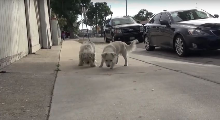 These 2 Best Friends Have Spent Their Days Roaming The Streets. But Now, Look At Their Smiles!