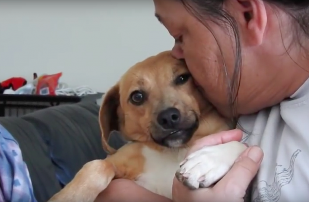 This Woman Has Saved Hundreds Of Dogs From Death And Completely Transformed Their Lives!