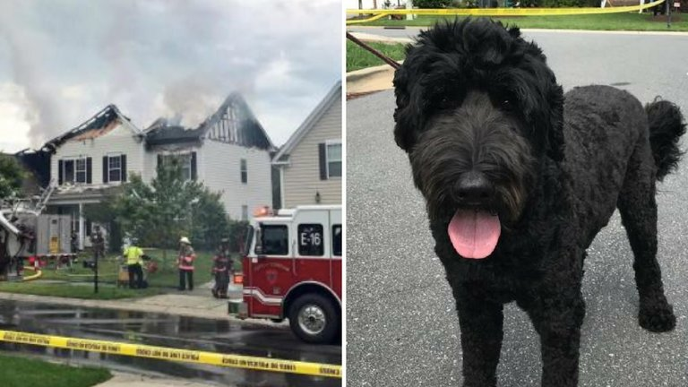 Officer Looked Into A Burning Home And Saw A Dog Staring Back At Him, Then Ran To Kick The Door In