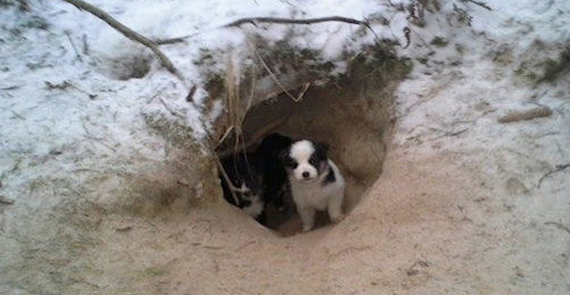 Man follows a dog into the woods and finds 9 puppies