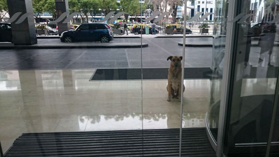 Dog gets adopted by the person he waited for every day outside of the hotel