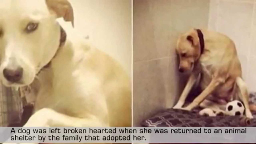 "Dog Once Called ""Saddest Dog in the World"" Finds Herself Looking for a Forever Family Again"