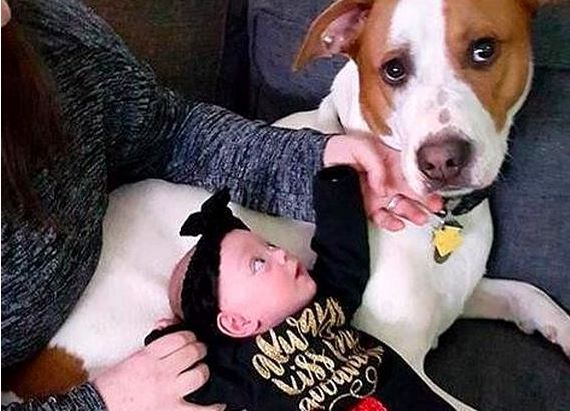 Rescue Dog Falls Madly in Love With His Baby Sister Before He Even Meets Her