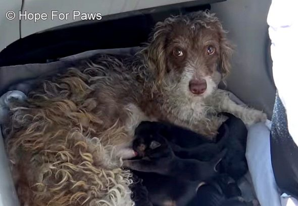 This Homeless New Mom Absolutely Could Not WAIT to Be Rescued With Her Puppies!