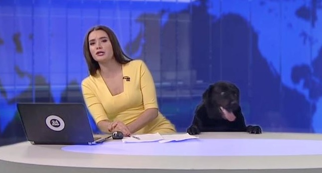 Dog Crashes Live News Broadcast, and the Video Is Quickly Going Viral