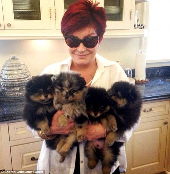 Ozzy & Sharon Osbourne to Open a Dog-Sitting Center on Their UK Estate