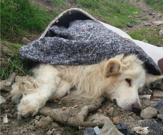 Owner banned from owning pets after rolling sick dog in rug and abandoning him on side of road