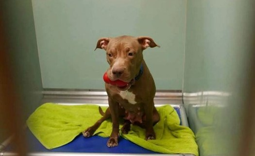 Death row pup uses her toys as 'pacifiers' to soothe her broken heart