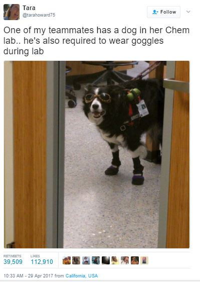 Stand Back, This Dog's Going To Try SCIENCE!