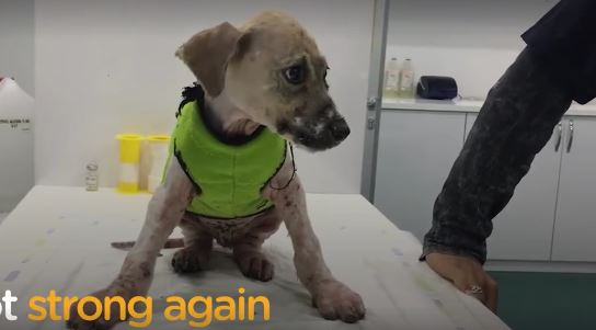 Kids covered this dog in glue and threw him in mud, but he wants you to see how strong he is