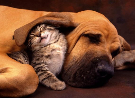 21 of the most unlikely napping buddies you'll ever see