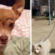 These 15 pets were left with the sitter, and now their owners totally regret it