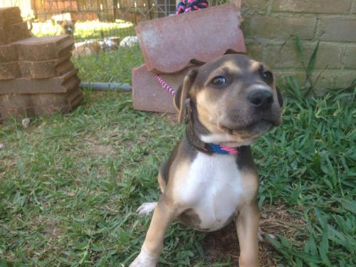 Dog Living in Drainpipe in Texas Is Rescued and Now Needs a Forever Family
